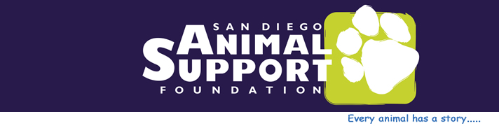San Diego Animal Support Foundation Tv Featured Pets Dog Cats And
