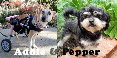 San Diego Animal Support Foundation: TV Featured Pets, Dog